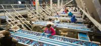 Holandia praca od zaraz na produkcji przy pakowaniu owoców Amsterdam