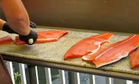 Praca Norwegia w przetwórni łososia bez znajomości języka od zaraz Bergen