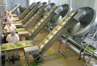 Bez języka praca Norwegia na produkcji mrożonek dla par Oslo od zaraz 2015
