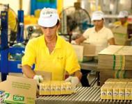 Praca Holandia w Tilburgu bez znajomości języka na produkcji przy pakowaniu