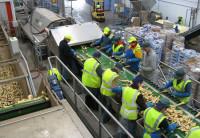Praca w Holandii przy pakowaniu warzyw od zaraz bez języka Zwaagdijk