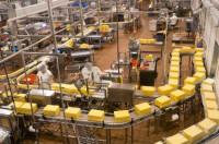 Pakowanie sera dam pracę w Niemczech bez języka od zaraz Dortmund