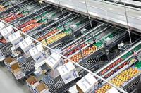 Oferta pracy w Holandii bez języka przy pakowaniu warzyw w przetwórni