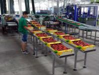 Praca Niemcy dla par bez języka przy pakowaniu owoców od zaraz Rostock