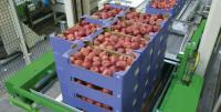Praca Holandia przy sortowaniu warzyw i owoców bez języka Ridderkerk