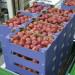 sortowanie-owocow-na-linii-produkcyjnej