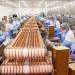 pakowanie-lososia-produkcja-rybna-norwegia