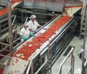 Holandia praca w Venlo przy pakowaniu warzyw bez znajomości języka od zaraz
