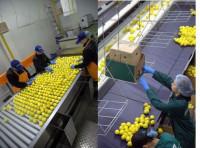 Oferta pracy w Niemczech na produkcji pakowanie owoców Kolonia bez języka