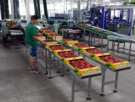 Praca w Norwegii dla par pakowanie owoców bez znajomości języka Bergen