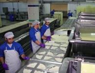 Aktualna praca w Holandii na produkcji serów w fabryce Almere 2015