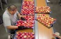 Praca w Niemczech bez języka od zaraz przy pakowaniu owoców Dortmund