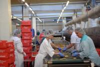 Praca Finlandia bez znajomości języka w piekarni na produkcji pieczywa i ciast