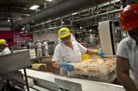 Oferta pracy w Holandii bez języka produkcja-pakowanie od zaraz Rotterdam
