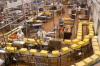 Bez znajomości języka dam pracę w Holandii na produkcji serów od zaraz Tilburg