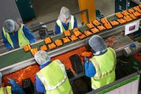 Od zaraz praca Szwecja bez znajomości języka Malmö pakowanie warzyw