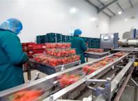 Od zaraz praca Anglia na produkcji pakowanie warzyw i owoców bez języka Chichester