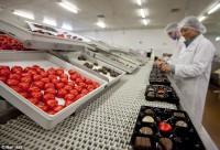 Bez znajomości języka Dania praca od zaraz produkcja czekoladek Aarhus