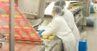 Praca w Holandii na produkcji przekąsek serowych od zaraz z j. angielskim