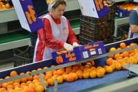 Od zaraz praca w Szwecji bez języka dla par sortowanie i pakowanie owoców