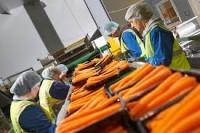 Bez języka ogłoszenie pracy w Holandii przy pakowaniu warzyw Poeldijk