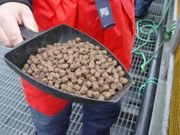 Ogłoszenie pracy w Norwegii od zaraz bez języka na produkcji karmy rybnej Kopervik