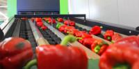 Moss Norwegia praca bez znajomości języka od zaraz przy pakowaniu warzyw
