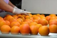 Szwecja praca pakowanie owoców od zaraz Sztokholm bez znajomości języka