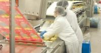 Ogłoszenie pracy w Holandii Woerden bez języka na produkcji serów od zaraz