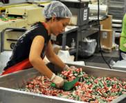 Od zaraz praca w Holandii bez języka przy pakowaniu cukierków Veghel