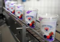 Dam pracę w Holandii bez znajomości języka na produkcji jogurtów Limbugia