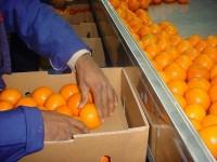 Od zaraz praca w Szwecji bez znajomości języka przy pakowaniu owoców Sztokholm