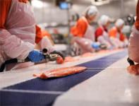 Dla kobiet ogłoszenie pracy w Danii przy pakowaniu ryb od zaraz Outrup