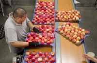 Od zaraz praca w Danii bez znajomości języka pakowanie owoców Næstved