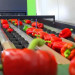 pakowanie-sortowanie-warzyw-owocow4