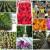 Ogrodnictwo-M