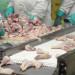 oferta pracy  Pakowanie , filetowanie kurczaków
