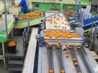 Fizyczna praca w Danii od zaraz sortowanie owoców bez języka Aarhus