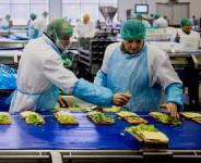 Od zaraz praca Norwegia dla par na produkcji kanapek w Oslo bez języka