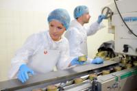 Praca w Holandii dla par od zaraz przy produkcji drobiu bez języka i stawki wiekowej