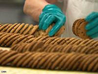 Od zaraz Holandia praca bez znajomości języka pakowanie ciastek Bunschoten