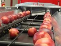 Bez języka praca w Holandii dla par przy pakowaniu owoców i warzyw na produkcji, Haga lub Oss
