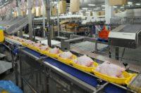 Oferta pracy w Holandii przy pakowaniu drobiu od zaraz bez języka w Hadze 2018