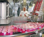 Produkcja jogurtów bez języka dam pracę w Danii od zaraz Kopenhaga