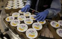 Praca Holandia na produkcji jogurtów typu greckiego z językiem angielskim, Limburgia