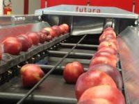 Dla par od zaraz praca w Holandii przy pakowaniu owoców, warzyw bez języka Haga i Oss