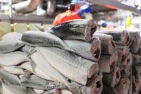 Oferta pracy w Danii na produkcji rybnej bez znajomości języka Skagen od zaraz