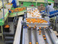 Dam fizyczną pracę w Holandii przy sortowaniu i pakowaniu owoców, Venlo