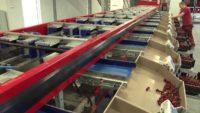 Holandia praca bez znajomości języka przy pakowaniu warzyw i owoców w Oss