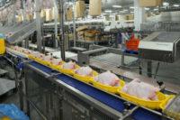 Bez języka od zaraz praca w Holandii także dla par – pakowanie kurczaków z bonusem świątecznym